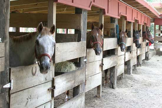 Horse_Stables